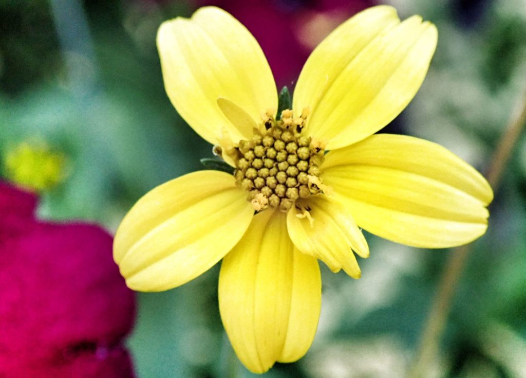 Yellow Flower Closeup Photography
