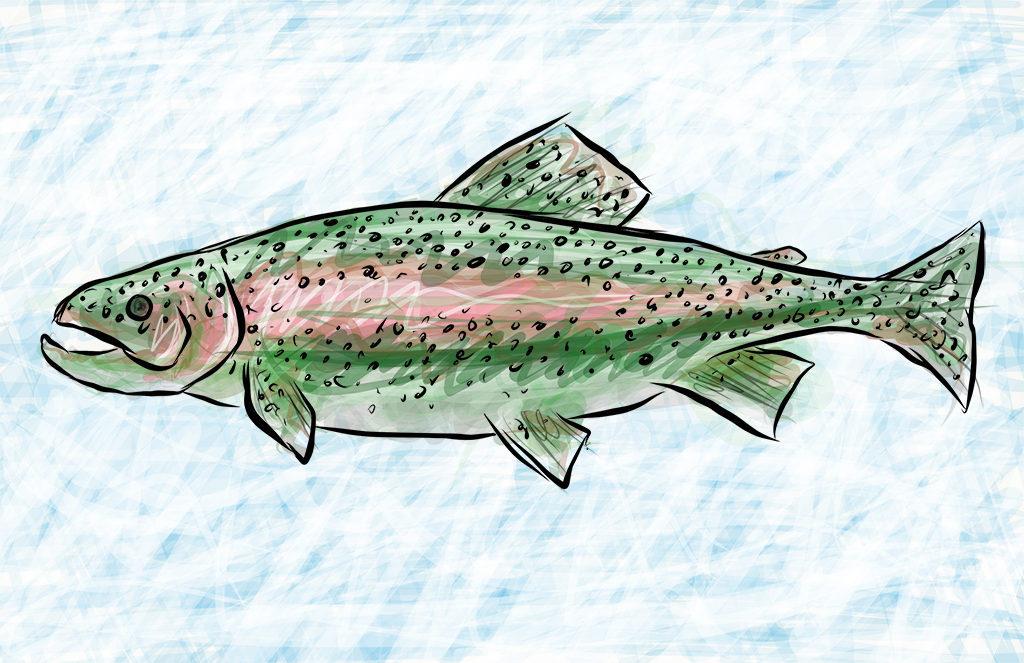 Rainbow Trout Digital Drawing