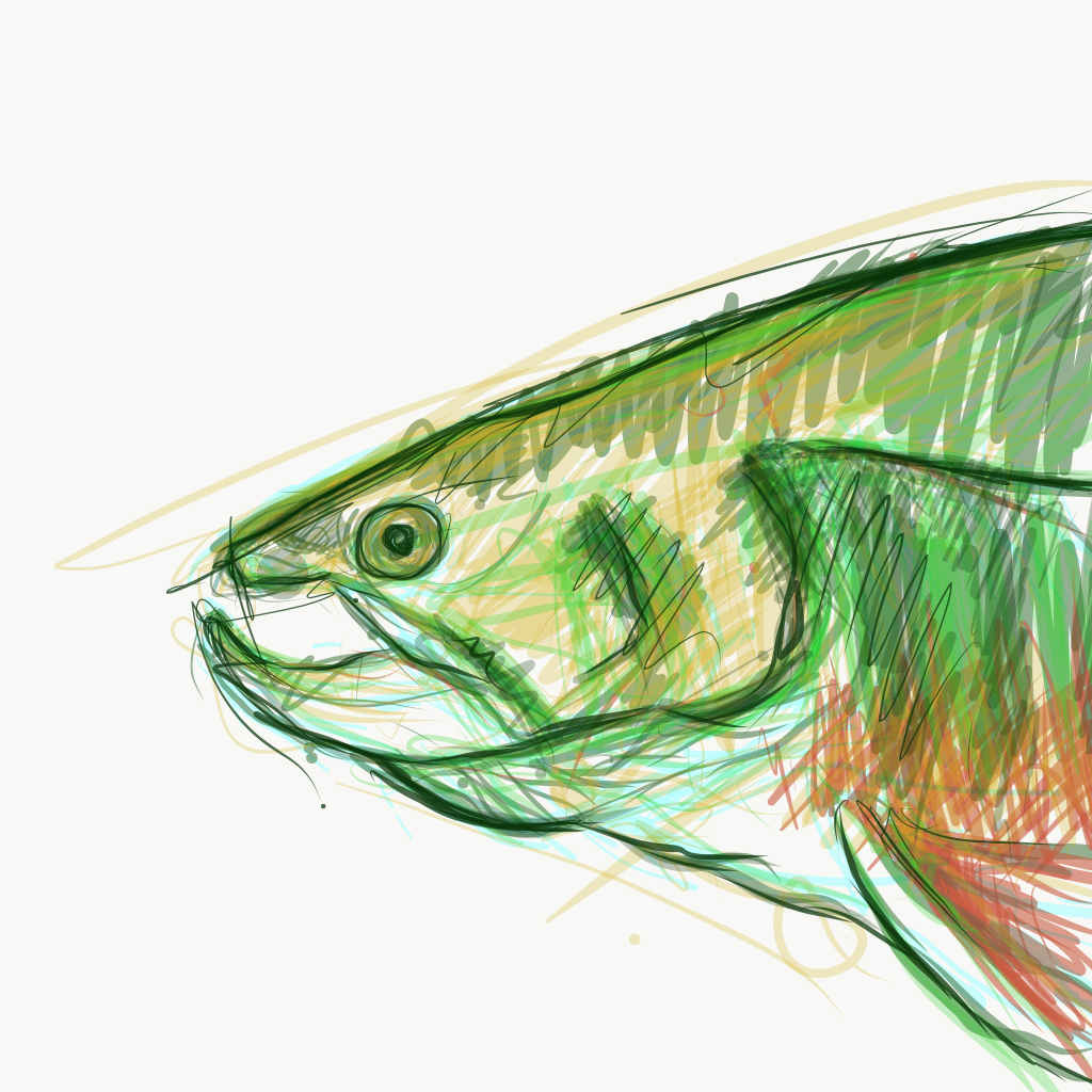Trout Bust Digital Drawing