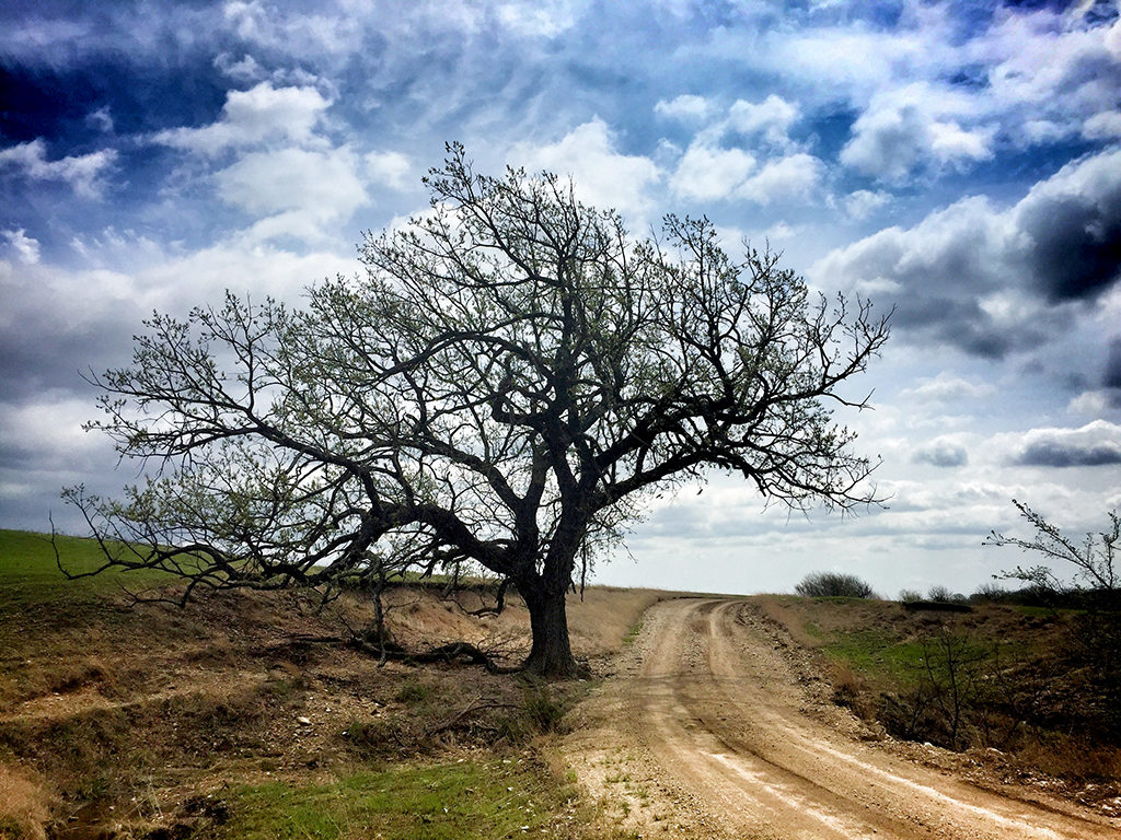 Tree on Camp Creek Road Photography