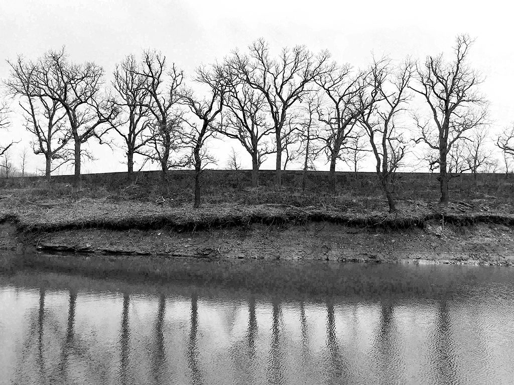 Bare Trees Photography