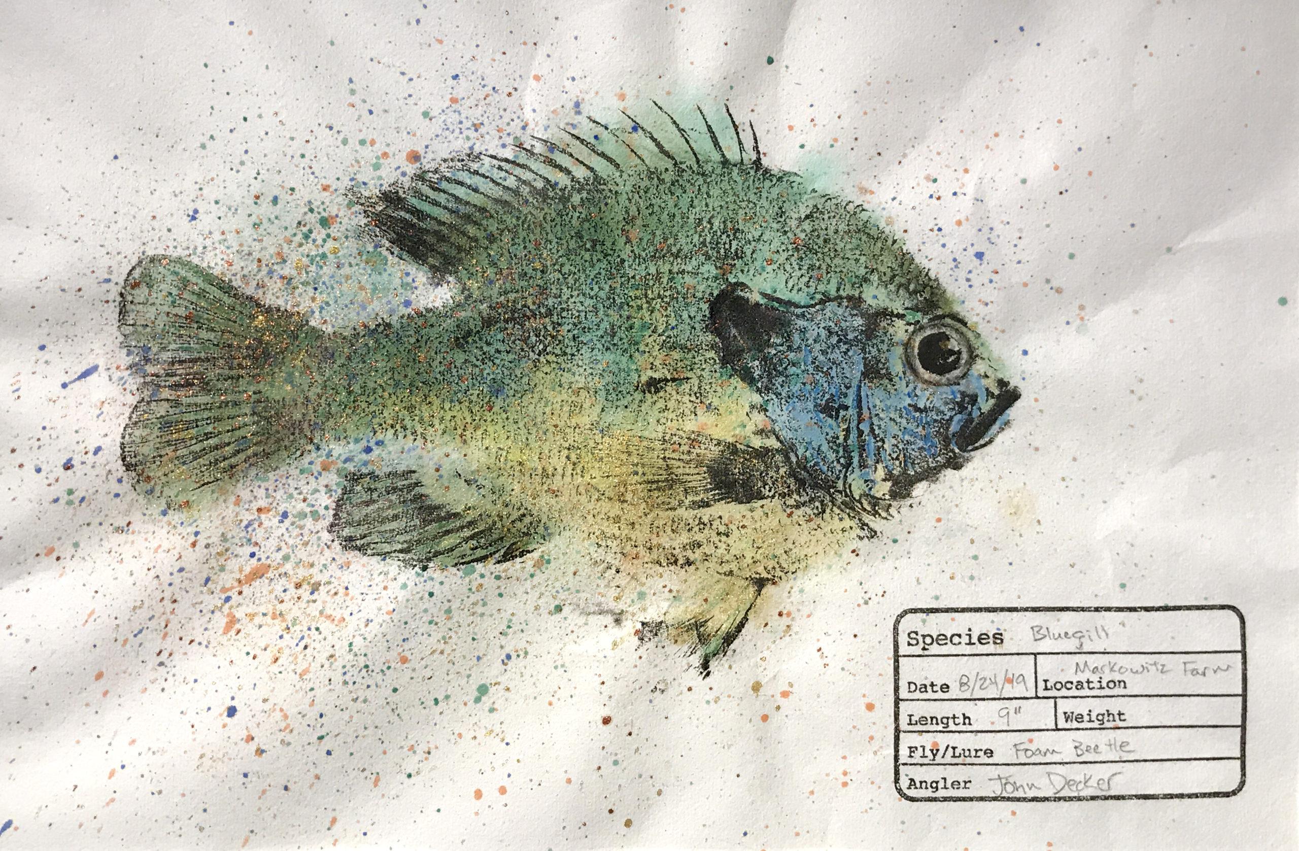Bluegill Gyotaku